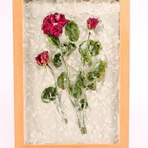 Kraljica rož - Vrtnice